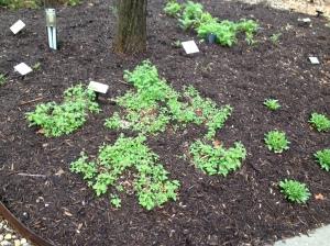 Herb Garden @ Butler