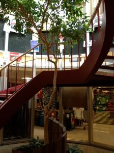 Tree IN Dickinson Union